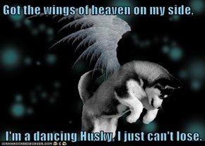 Got the wings of heaven on my side,   I'm a dancing Husky, I just can't lose.