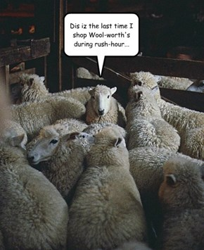 Shear Nonsense