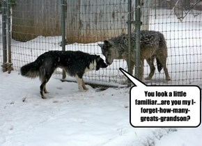 Dog Meets Wolf