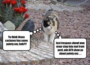 Watch-cat establishes boundaries...