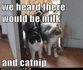 we heard there would be milk  and catnip
