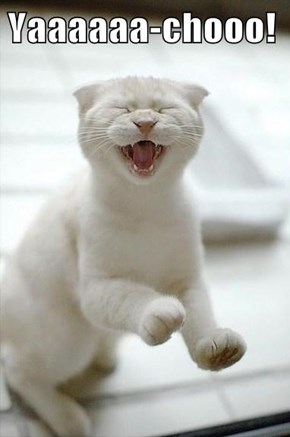 Yaaaaaa-chooo!