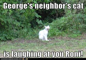 George's neighbor's cat  is laughing at you Roni!
