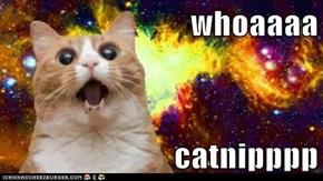 whoaaaa  catnipppp