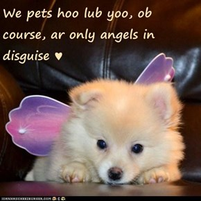 We pets hoo lub yoo, ob course, ar only angels in disguise ♥