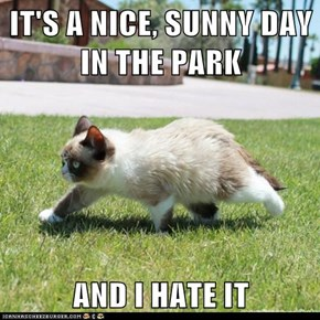 IT'S A NICE, SUNNY DAY IN THE PARK  AND I HATE IT