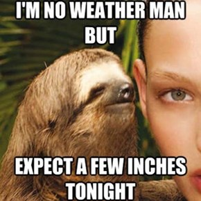 Sloths Are Really Naughty