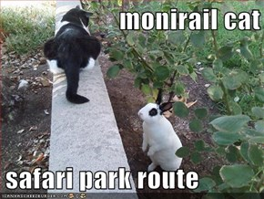 monirail cat  safari park route