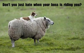 Don't  you  just  hate  when  your  boss  is  riding  you?