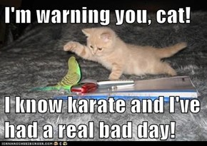 I'm warning you, cat!  I know karate and I've had a real bad day!