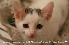 Ebrywun Peas Welcome little *Raindrop* to da ICHC fambuwee ♥