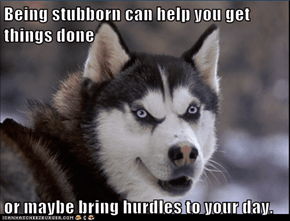 Being stubborn can help you get things done   or maybe bring hurdles to your day.