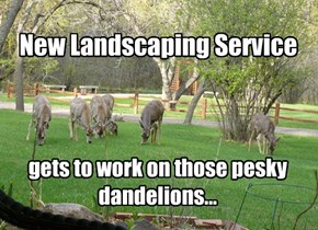 Elite Lawn Trimmers
