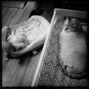 Baby in the Cat Bed and Cat in the Baby Bed