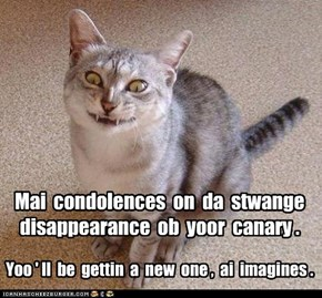 Sympathetic neighbor kitteh always knows when tragedy has struck.