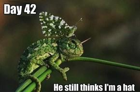 True Camouflage