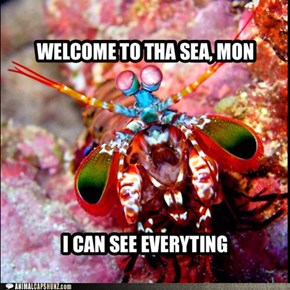 mantis shrimp says hello