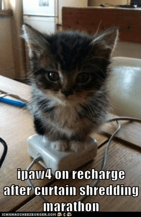 ipaw4 on recharge after curtain shredding marathon