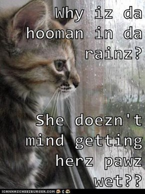 Why iz da hooman in da rainz?