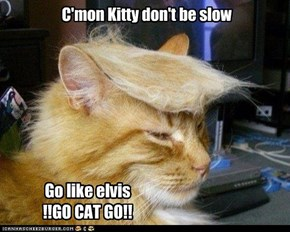 C'mon Kitty don't be slow