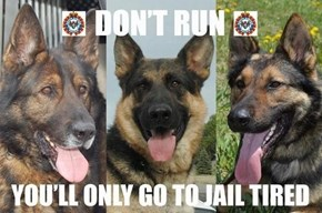 Don't Even Try to Outrun Police Dogs