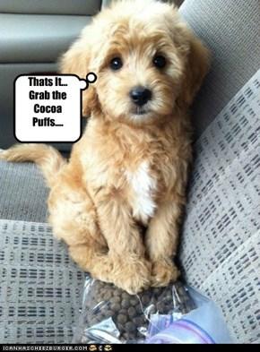 Evil Doggeh
