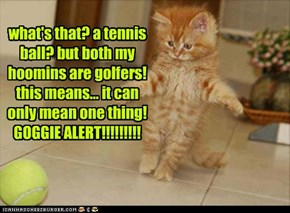 what's that? a tennis ball? but both my hoomins are golfers! this means... it can only mean one thing! GOGGIE ALERT!!!!!!!!!