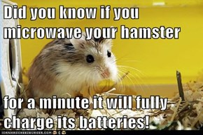 Did you know if you microwave your hamster  for a minute it will fully charge its batteries!