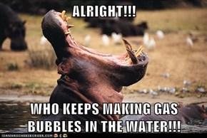 I Smell Hippo-crisy...