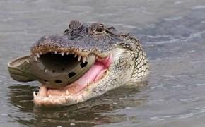 Croc Squared