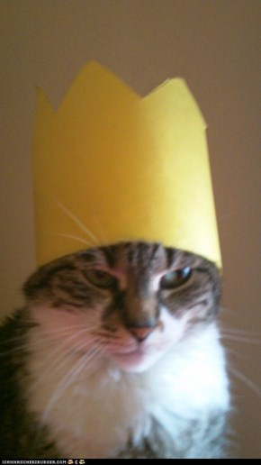 I hereby crown you, Queen Cat