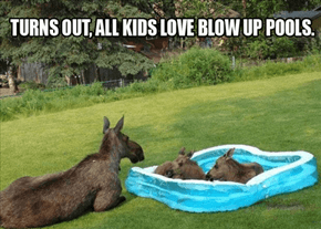 Moose Over and Let Your Brother in, too