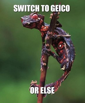Geico's New Campaign