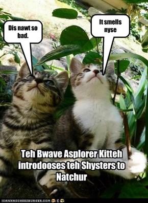 BAK and KK Shysters asplore teh world