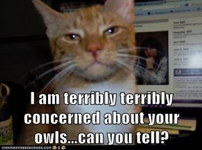 I am terribly terribly concerned about your owls...can you tell?