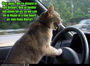 After all teh kitties have arrived, Rufus drives everyone to teh Airport to catch teh next plane for Nepal to rescue Harry!