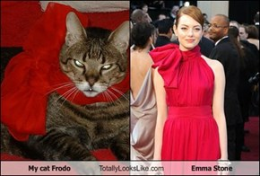 My cat Frodo Totally Looks Like Emma Stone