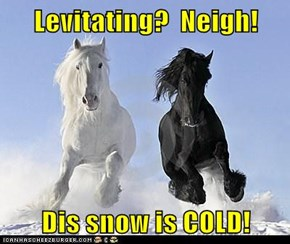 Levitating?  Neigh!  Dis snow is COLD!