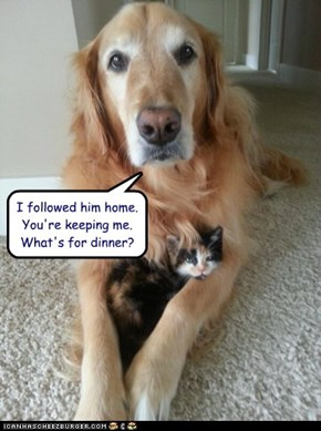I followed him home.  You're keeping me.  What's for dinner?
