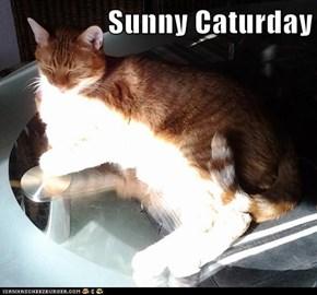 Sunny Caturday