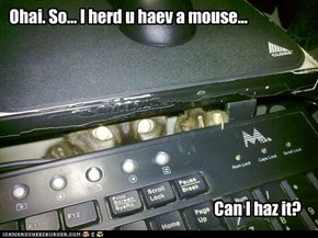 Silly Kitty... That's Not the Type of Mouse You Are Thinking.