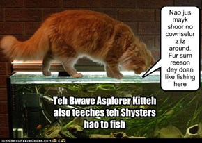 BAK asplores the fish tank wif teh Shysters.
