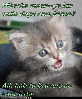 Whacha mean--ya kin onlie dopt wun kitten?  Aih hab tu bruvers an wun sista!