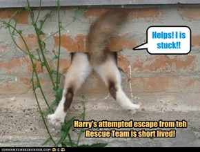 A confused an' embarrassed Harry tries to escape teh Drunk Kittie Pub thru a narrow hole in teh pub wall! But Harry gets stuck an' is finally safe in teh paws of his brother Rufus an' teh Rescue Team!!