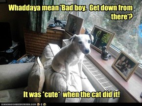 What's the cat know about you that I don't...?