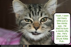 At teh Yeti Bar an' Grill, Harry wasn't to be found.. But dis snarky kittie had a hot lead!