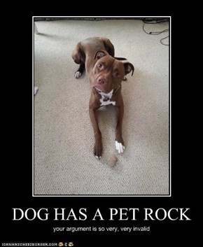 DOG HAS A PET ROCK