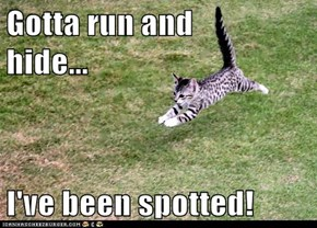 Gotta run and           hide...  I've been spotted!