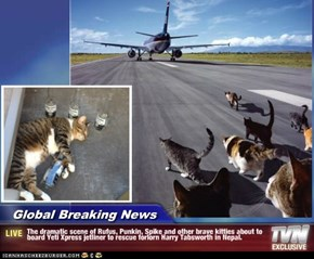 Global Breaking News - The dramatic scene of Rufus, Punkin, Spike and other brave kitties about to board Yeti Xpress jetliner to rescue forlorn Harry Tabsworth in Nepal.