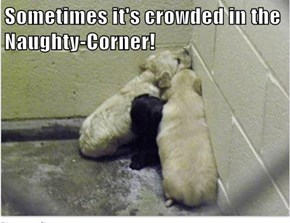 Sometimes it's crowded in the Naughty-Corner!